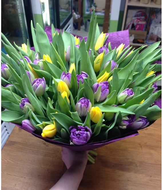 Букет из 55 фиолетовых и желтых тюльпанов