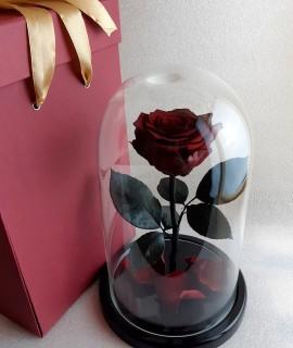 Бордовая роза в колбе
